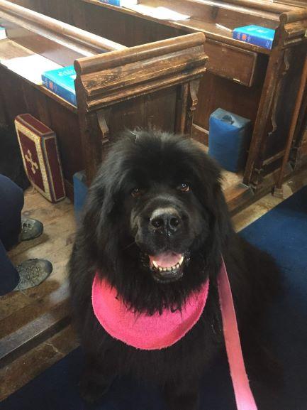Pet Service 2019 resized